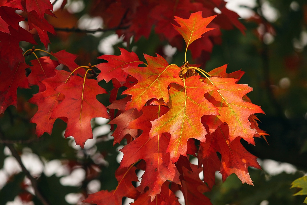 Höstens stödjande gruppaktiviteter